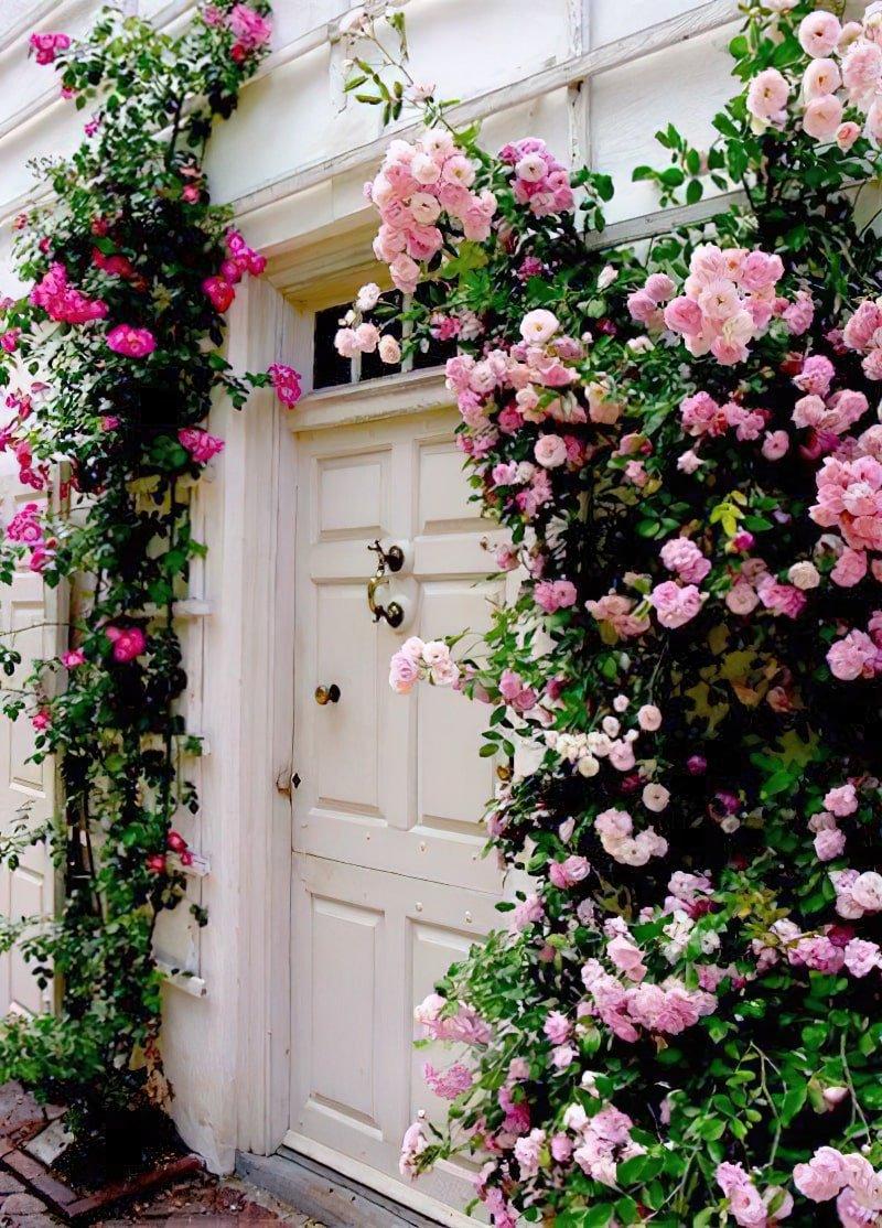 EsionSilenceProperty - Rose Duplex Apartment - Exterior - Entrance